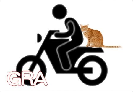 Rider_bike_cat